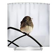 Pretty Winter Junco Shower Curtain by Christina Rollo