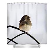 Pretty Winter Junco Shower Curtain