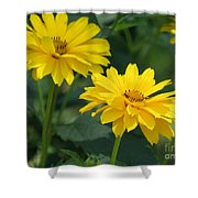 Pretty Yellow False Sunflowers In Bloom Shower Curtain