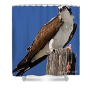Prey For The Osprey Shower Curtain