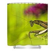 Preying Mantis Shower Curtain