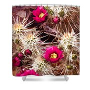 Prickley Cactus Plants Shower Curtain