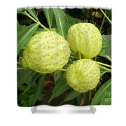 Prickly Balloon Plant Shower Curtain