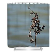 Prickly By Nature Shower Curtain