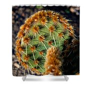 Prickly Cactus Leaf Green Brown Plant Fine Art Photography Print  Shower Curtain