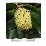 Prickly Fruit Shower Curtain