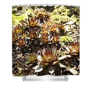Prickly Lilies Shower Curtain