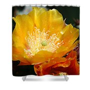 Prickly Pear Blossom Shower Curtain