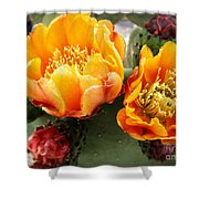 Prickly Pear Blossom Orange Shower Curtain