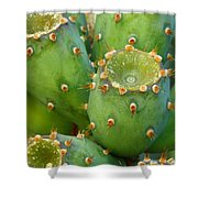 Prickly Pear Cactus 2am-105306 Shower Curtain