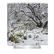 Prickly Pear Cactus And Mesquite Tree Shower Curtain