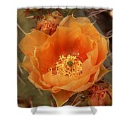 Prickly Pear Cactus Blooming In The Sandia Foothills Shower Curtain