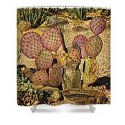 Prickly Pear Cactus Dsc08545 Shower Curtain
