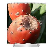 Prickly Pear Cactus Fruit - Indian Fig Shower Curtain