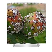 Prickly Pear With Cochineal Bugs Shower Curtain