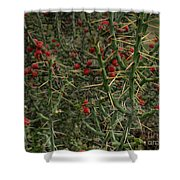 Prickly Pete Cactus Shower Curtain