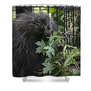 Prickly Pete Shower Curtain