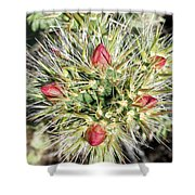 Prickly Pleasure Shower Curtain
