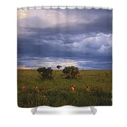 Pride Of Lions Shower Curtain