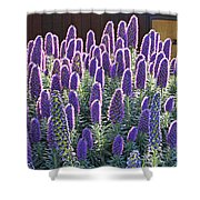 Pride Of Madeira  7162 Shower Curtain