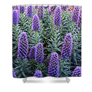 Pride Of Madeira  7194 Shower Curtain