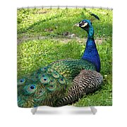 Pride Of Peacock Shower Curtain