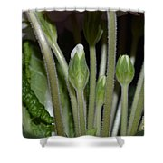 Primeroses Steam And Buds Shower Curtain