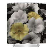 Primrose Flowers Shower Curtain