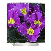 Primrose Purple Shower Curtain
