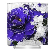 Primulas In The Snow Shower Curtain