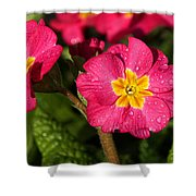 Primulas Shower Curtain