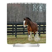 Prince Charming Shower Curtain