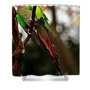 Princess Parrot On A Tree. Shower Curtain