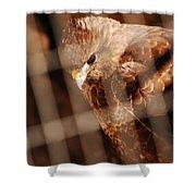 Prisoner Hawk  Shower Curtain