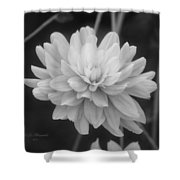 Prissy In Black And White Shower Curtain