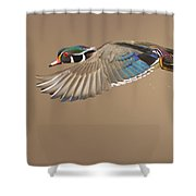 Probably The Most Beautiful Of All Duck Species Shower Curtain by Mircea Costina Photography