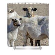 Professional Sheep Shower Curtain
