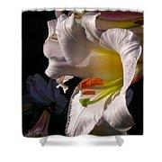 Profile Lilium Regale Shower Curtain