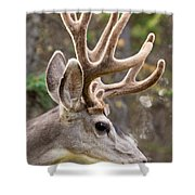 Profile Of Mule Deer Buck With Velvet Antler  Shower Curtain
