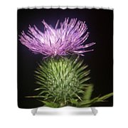 Profile Of Pruple Thistle Shower Curtain