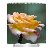Profile View Yellow And Pink Rose Shower Curtain