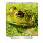 Profiling Frog Shower Curtain