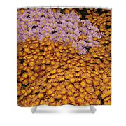 Profusion In Yellows Pinks And Oranges Shower Curtain