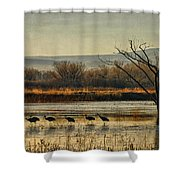 Promenade Of The Cranes Shower Curtain