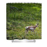 Pronghorn Antelope Among Wildflowers Shower Curtain