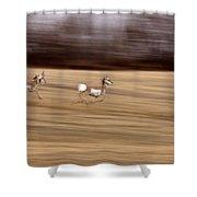 Pronghorn Antelope Shower Curtain