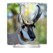 Pronghorn Antelope Portrait Shower Curtain