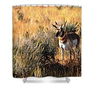 Pronghorn Buck Shower Curtain