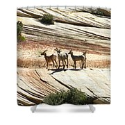 Pronghorn Deer Shower Curtain
