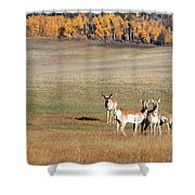 Pronghorn In The Park Shower Curtain